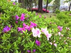 2013春の花.jpg